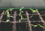 Vzgajanje sadik