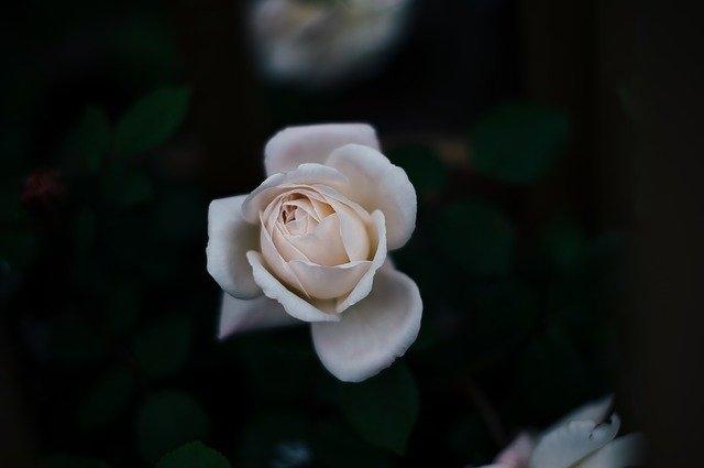 festival_vrtnic_ljubezen
