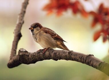 domace zivali ptice