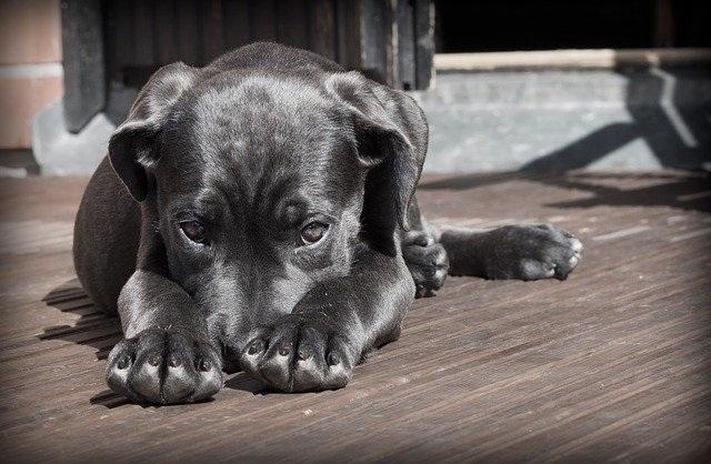 pes pse na povodce zakon