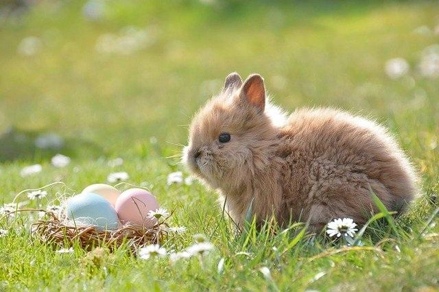 velika noč velika noč 2018 zajček paklenica