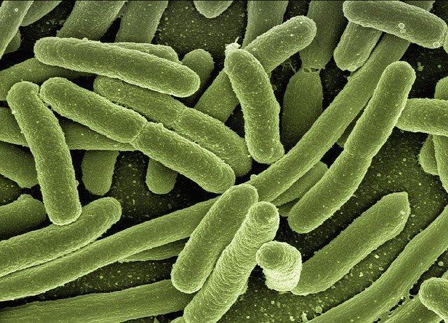 cepljenje bakterije