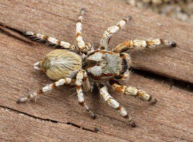razstava največjih pajkov