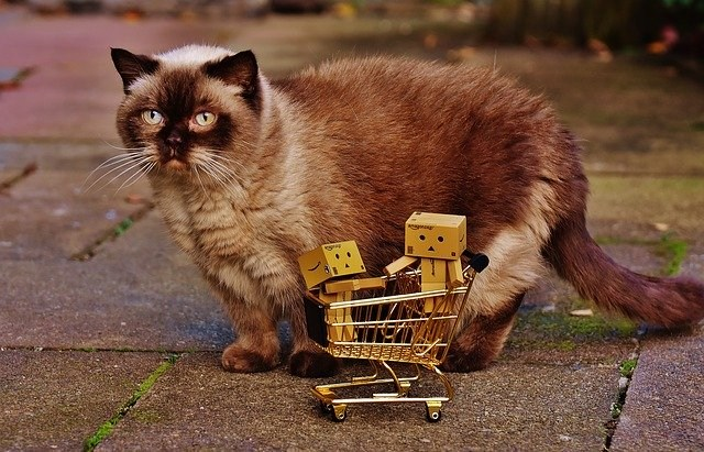 izvirna darila maček