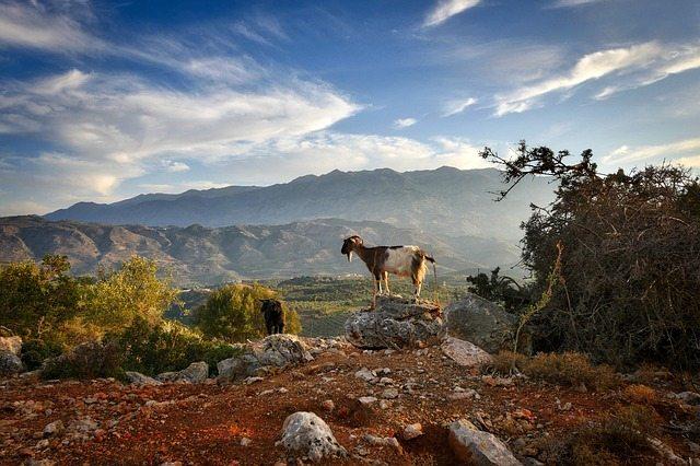 kreta koza
