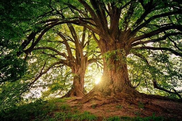 treecelet drevo