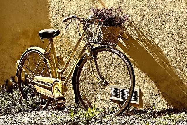 katero kolo izbrati rumena